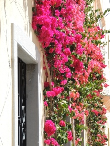 bougainvillea outside Olhaos music school