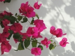 Algarve colours