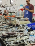 Fish Market (9)