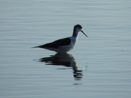 Stilt in deep water