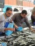 Fish Market (5)