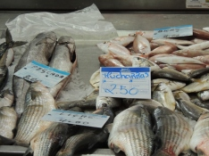 Hake, Pandora, Two-banded Bream, and Grey Mullet