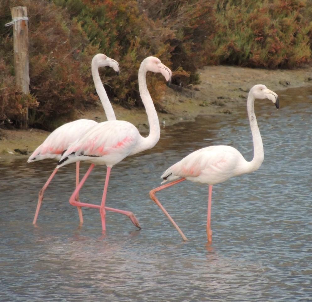 Close up of Flamingoes