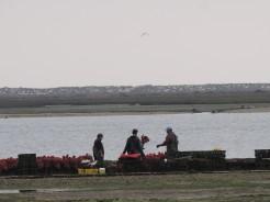 Shellfish farm