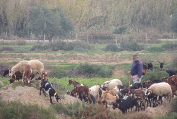 and the herdsman
