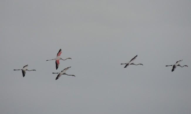 Christmas Eve Flamingoes