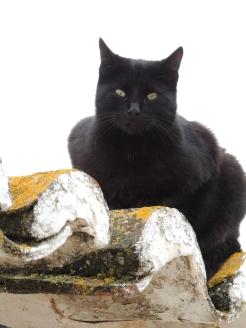 Another feline friend