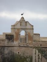 Stork on Forte de São Sebastião