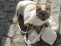 Took a liking to one of our bags