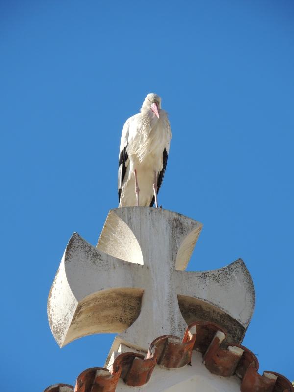 Olhao stork
