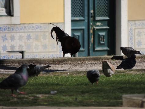 amongst the pigeons