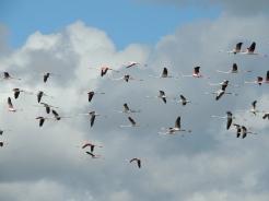 Flamingo line up