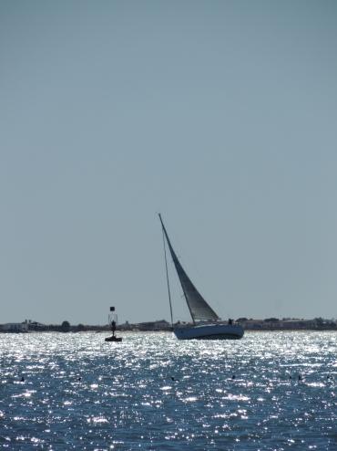 Sailing in the Ria Formosa