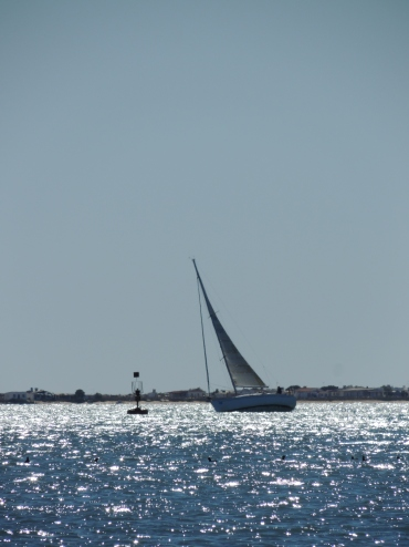 Sailing in the Ria Formosa