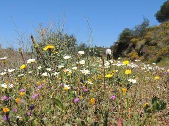 Spring wildflowers under foot