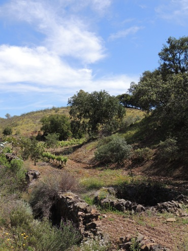 Cultivated land and working well