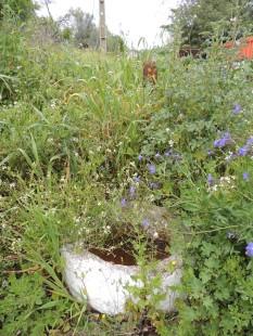 Algarvian water bowl