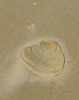 A shell or Saturn's curves?