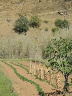 Mondern Interplanting