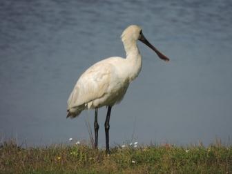 Just look at that beak
