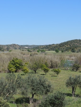 Orchards and Olive Trees beside Ribeira de Odeleite