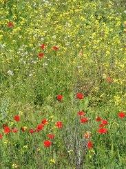 Spring Meadows