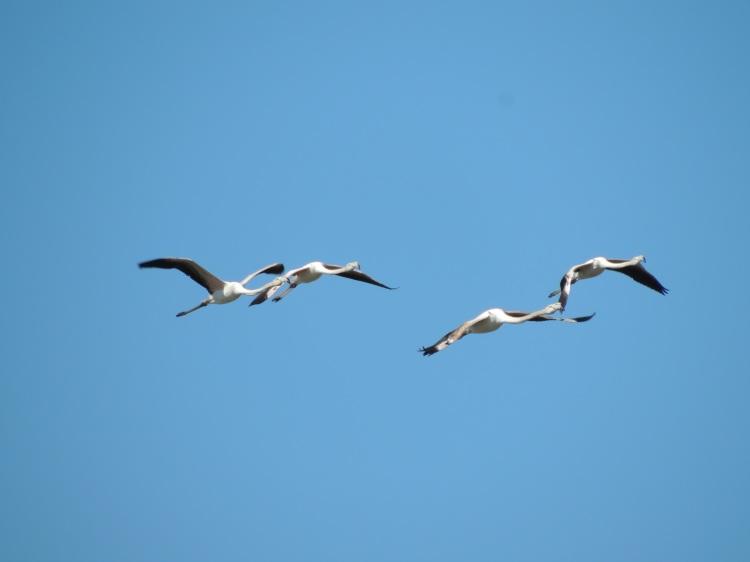juveniles-in-flight