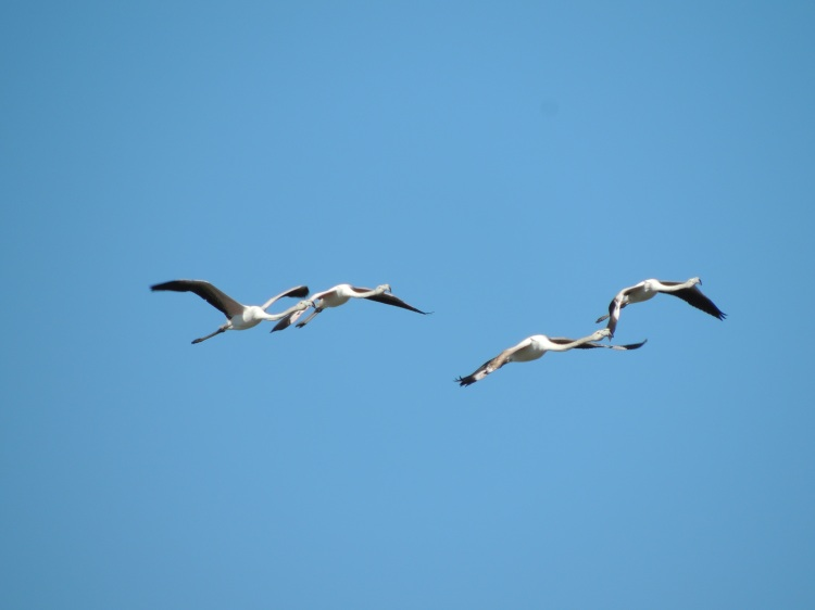 juveniles-in-flight