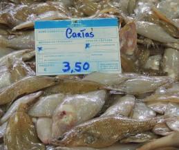flounders