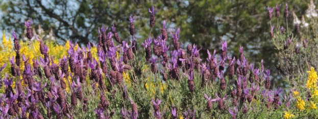 gorse-and-heather-a-winning-combination