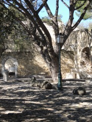 trees-in-castelo-de-sao-jorge