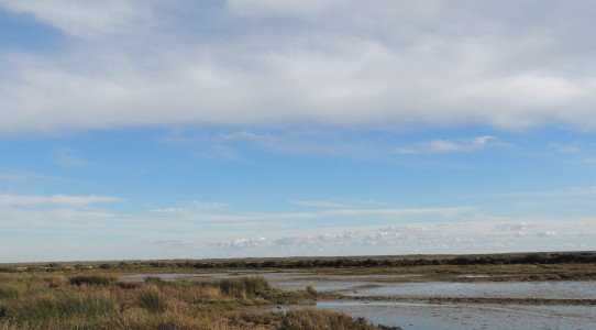 Birding mudflats