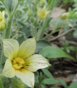 The female flower