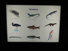 And finally fauna