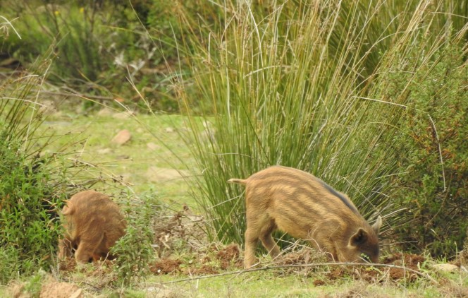 Piglets busy