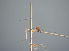 Aerial watch