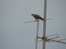 Aerial perch