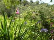 Algarvian hedgerow
