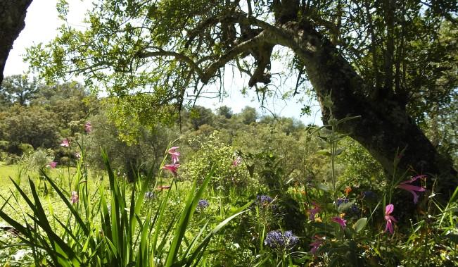 Algarvian hedgerows