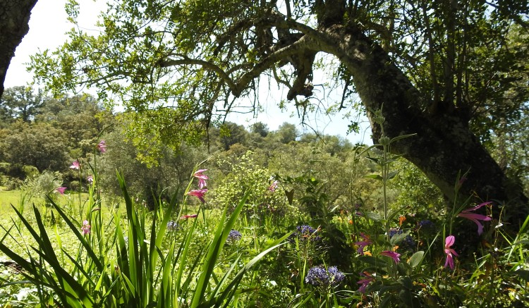 Algarvian hedgerows