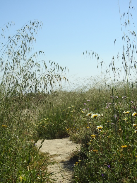 Finding your way through the grasses