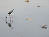 Just compare to the other wader