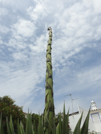 Century Plant towering above