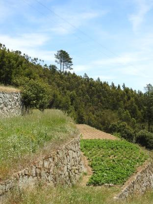Terraces of Monchique