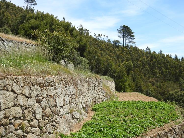 Beautiful dry-stone walls