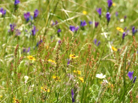 Serra flower meadows