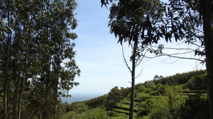Monchique Terraces