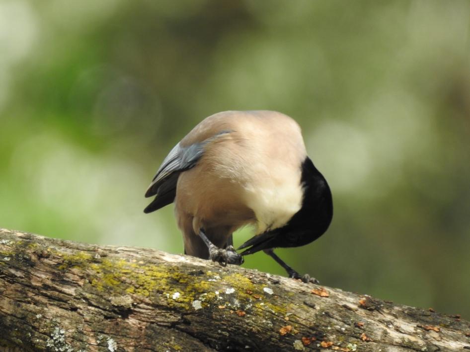 A nut I think
