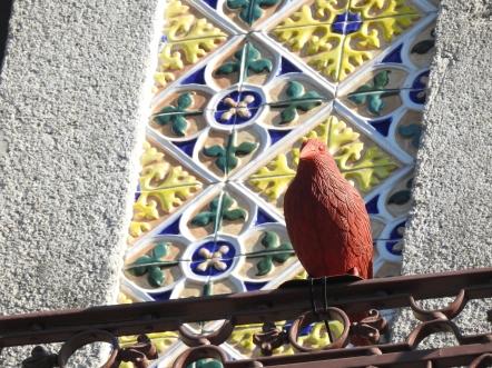Unusual pigeons in Porto!