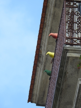 Spot one above the yellow pigeon!